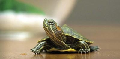 Содержание рептилий, земноводных иамфибий дома