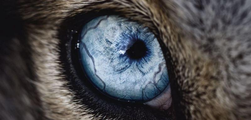 Травмы глаз собак