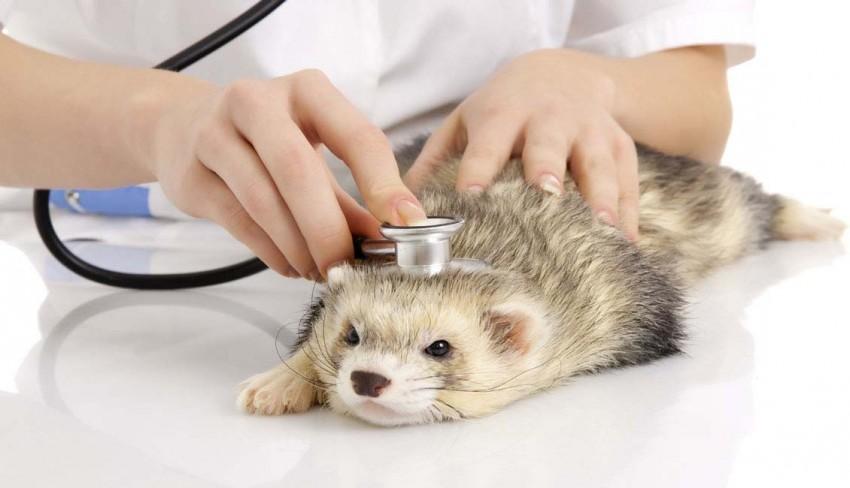 Ферретолог