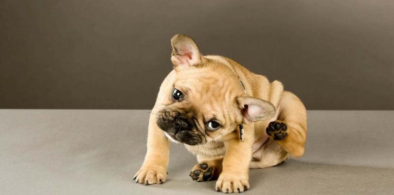 Что делать, если укошки или собаки появился зуд?