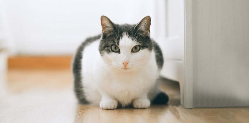 Вирусный лейкоз кошек: анализы, лечение, прививки