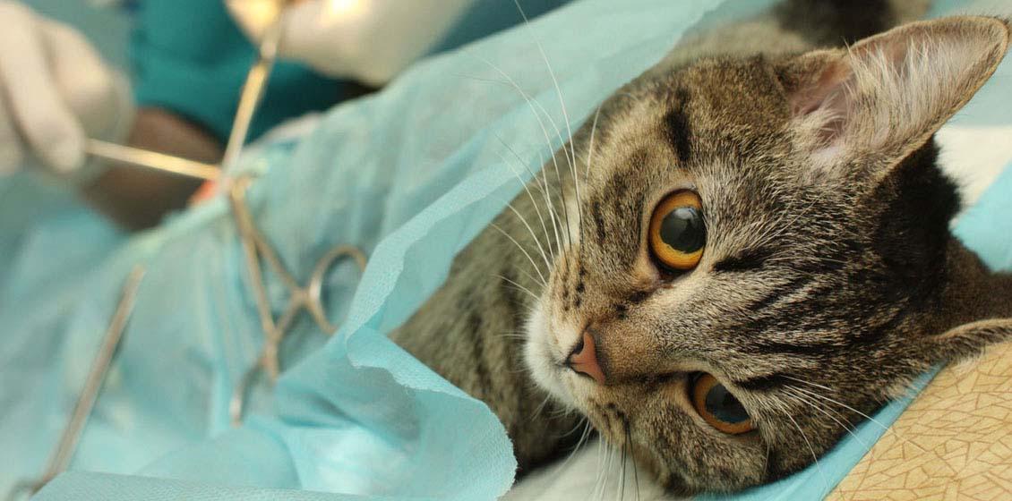 Кастрация котов глаза