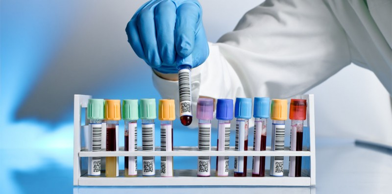 Подготовка собаки, кошки, птицы ксдаче крови наанализы