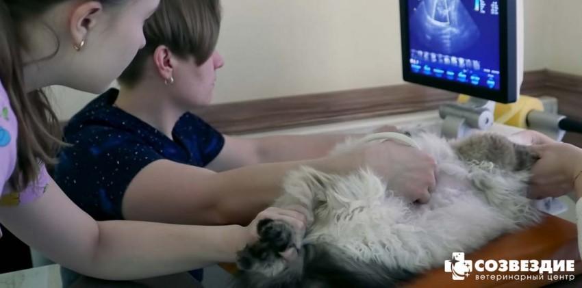УЗИ / ЭКГ собак и кошек - ветеринарная клиника СВАО, Москва