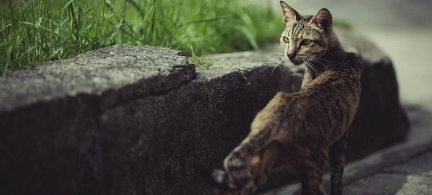 Кошка похудела и не ест корм