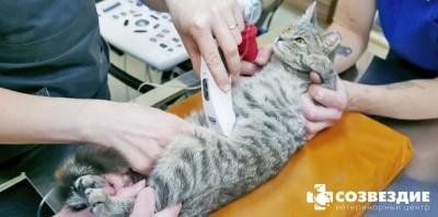 УЗИ брюшной полости кошки: подготовка, сложности, цена в Москве
