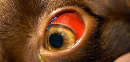 dogeye red