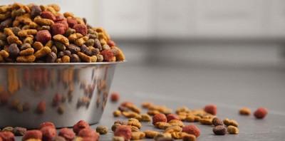 Пищевая аллергия усобаки: симптомы илечение