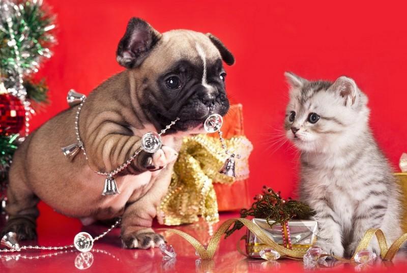 11 опасностей, которые подстерегают собак и кошек в новогоднюю ночь