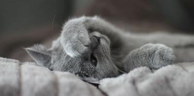 Чем болеют кошки?