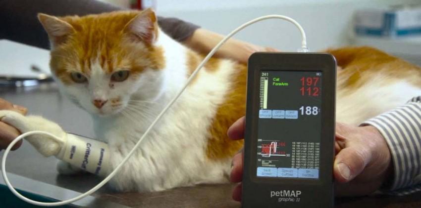 Высокое давление усобак икошек: причины, симптомы, как измерить