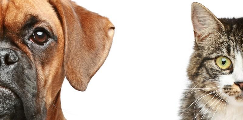 Прививка от бешенства собаке и кошке: сколько стоит вакцинация в Москве, карантин, сроки и схема