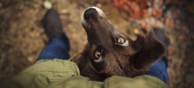 Лептоспироз собак в Москве