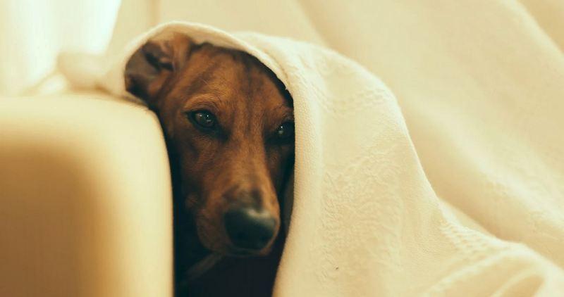 Рвота у собаки: лечение в Москве